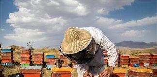 مددجویان روستایی باعث ایجاد ۳۲۷ هزار فرصت شغلی در طول برنامه ششم توسعه کشور شدند